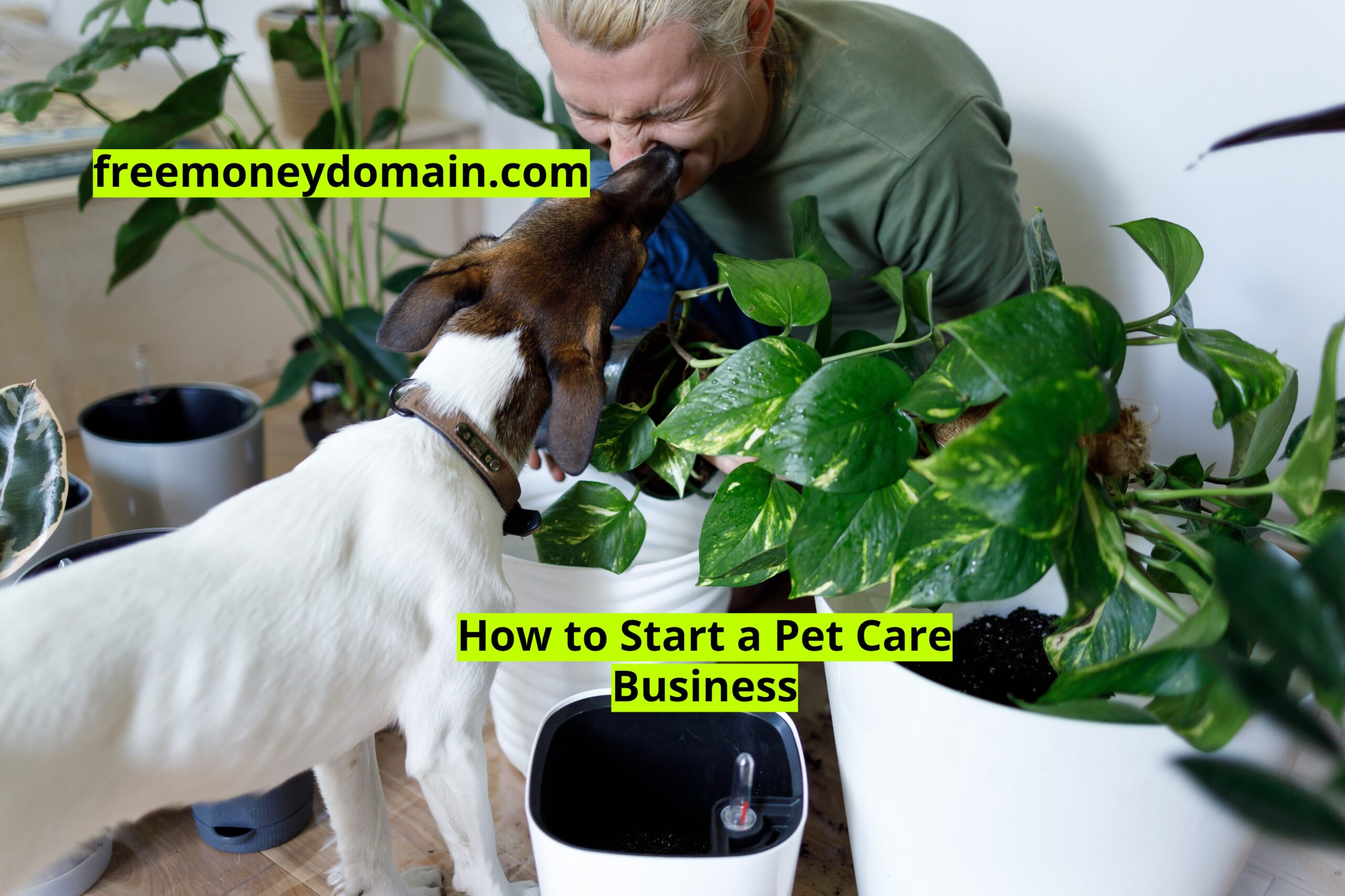 How to Start a Pet Care Business in 2021